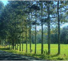 Tree lined Road Sticker
