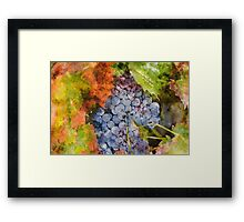 Grapes in the Vineyard Framed Print
