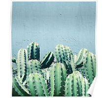 Cactus & Teal #redbubble #lifestyle Poster