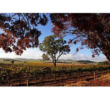 Barossa Autumn Landscape Australia Photographic Print