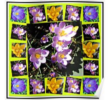 Cute Crocuses Collage Poster