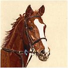 Proud - A thoroughbred standing proud by Patricia Barmatz