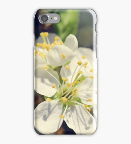 plum flowers blossoming in the spring iPhone Case/Skin