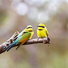 Rainbow Bee Eaters by mncphotography