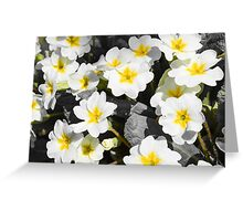 primrose Bush with white flowers Greeting Card
