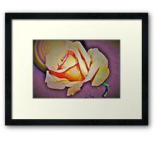 A rose in the sun Framed Print
