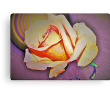 A rose in the sun Metal Print