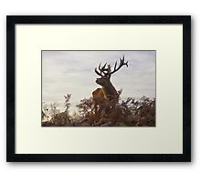Proud Monarch surveying the herd Framed Print