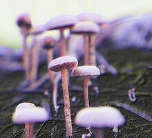 Mushrooms by virginian
