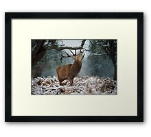 Red Deer Stag Explores the snow Framed Print