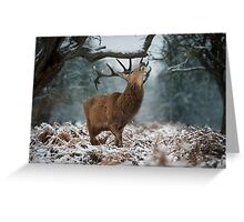 Red Deer Stag Explores the snow Greeting Card