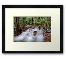 Rainforest cascades Framed Print