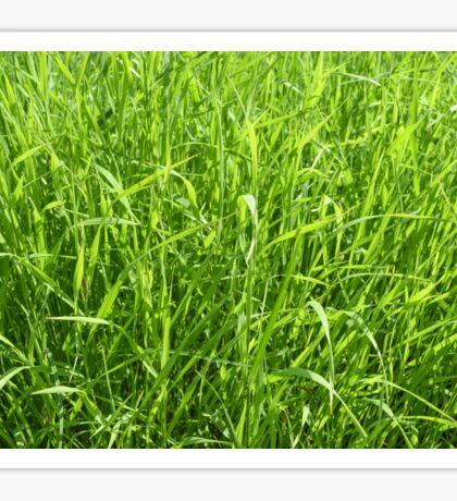 long green grass background Sticker