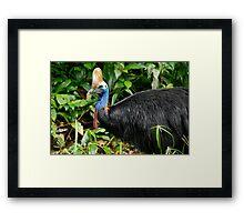 Southern Cassowary Framed Print