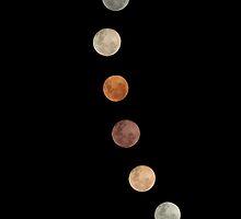 Moon Gathering - Vertical by Kellie R