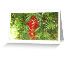 Bottlebrush Tree Greeting Card