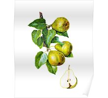 Pears on the branch Poster