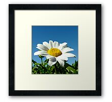 White Daisy Framed Print