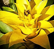 Bromeliad Yellow by Terri Chandler
