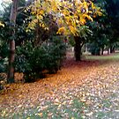 Colours of Autumn by MardiGCalero