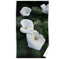 Three Lilies Poster