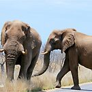 CONFRONTATIONS -  THE AFRICAN ELEPHANT – Loxodonta Africana by Magriet Meintjes