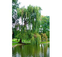 Boston Common Study 5  Photographic Print