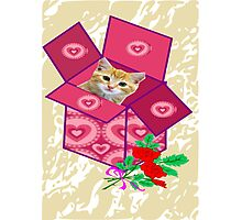 Fluffy in a gift Box (6360 Views) Photographic Print