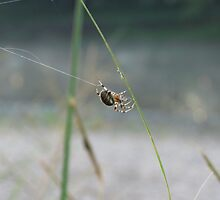 Spider by the River by Veronica Schultz