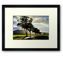 Beautiful sunset through the trees, empty way in the fields of Alsace, Frabce, with mountains on background Framed Print
