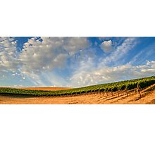 Vineyards Photographic Print