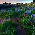PAth to Tatoosh by DawsonImages