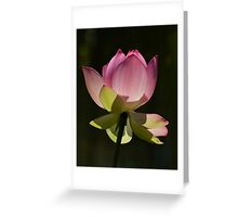 Filtering Light...... Greeting Card
