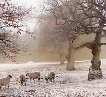 Winter grazing by Lyn Evans