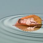 Autumn baby by Lyn Evans
