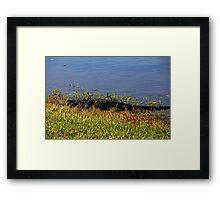 Gator in the Preserve Framed Print
