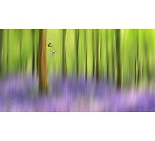 The bluebell wood Photographic Print