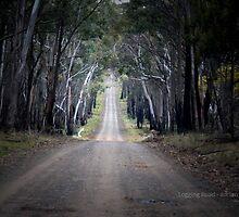 Logging Road by garts