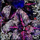 Coleus Abstract by Dana Roper