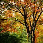 Fall colored tree by LudaNayvelt