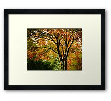 Fall colored tree Framed Print
