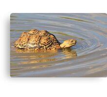 Tortoise Summer Swim - Natural Fun Canvas Print