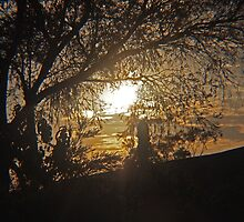 Touched by the sun - Kilmore East Vic Australia by Margaret Morgan (Watkins)