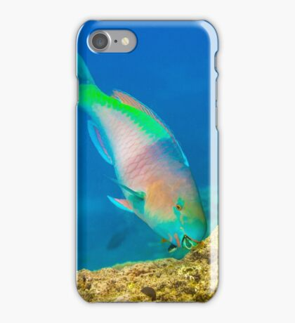 Parrot Fish iPhone Case/Skin