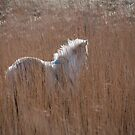 Pony in the reeds by Mitch  McFarlane