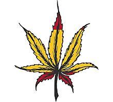 Cannabis leaf  Photographic Print