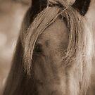 Fell pony by Mitch  McFarlane