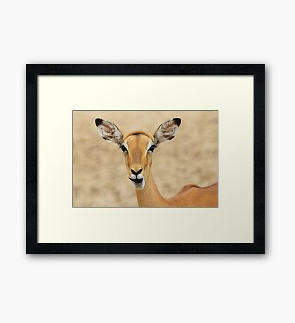 Impala Fun - Wildlife Humor from Africa.  Framed Print