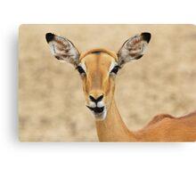 Impala Fun - Wildlife Humor from Africa.  Canvas Print