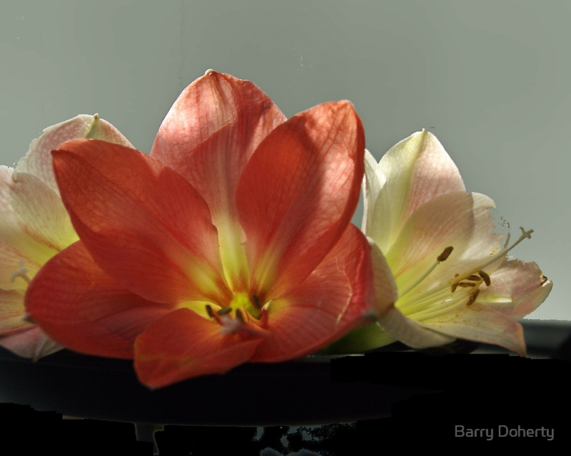 Trio by Barry Doherty